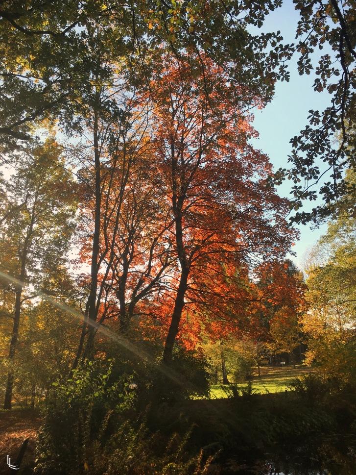 lina-levien-autumn-fall (11)