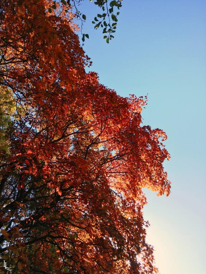 lina-levien-autumn-fall (13)