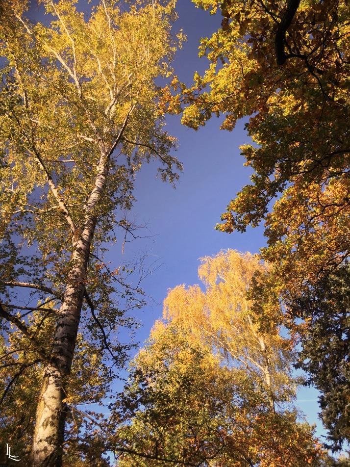 lina-levien-autumn-fall (19)