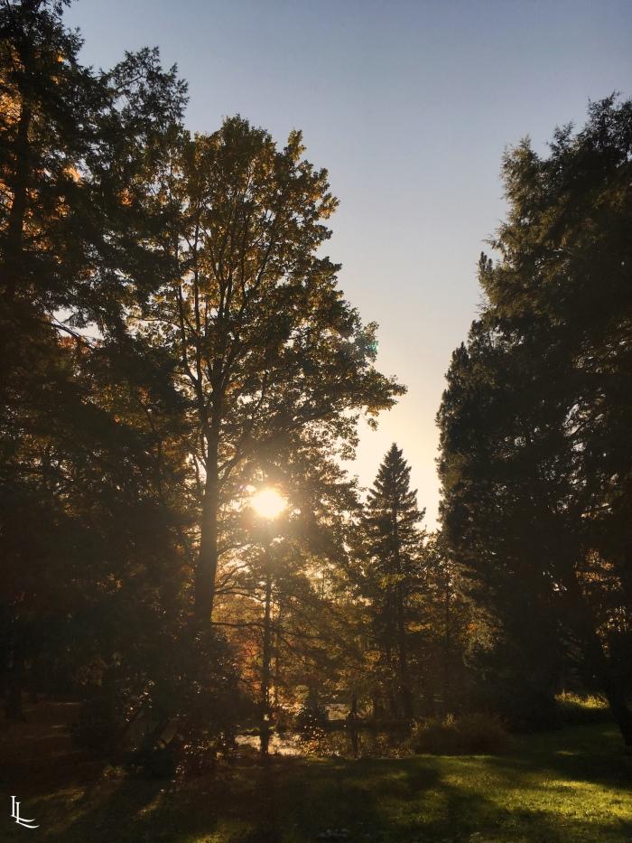 lina-levien-autumn-fall (22)