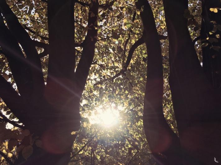 lina-levien-autumnal-sun