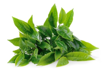 lina-levien-green-tea-leaves