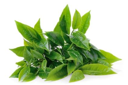 lina-levien-green-tea-leaves