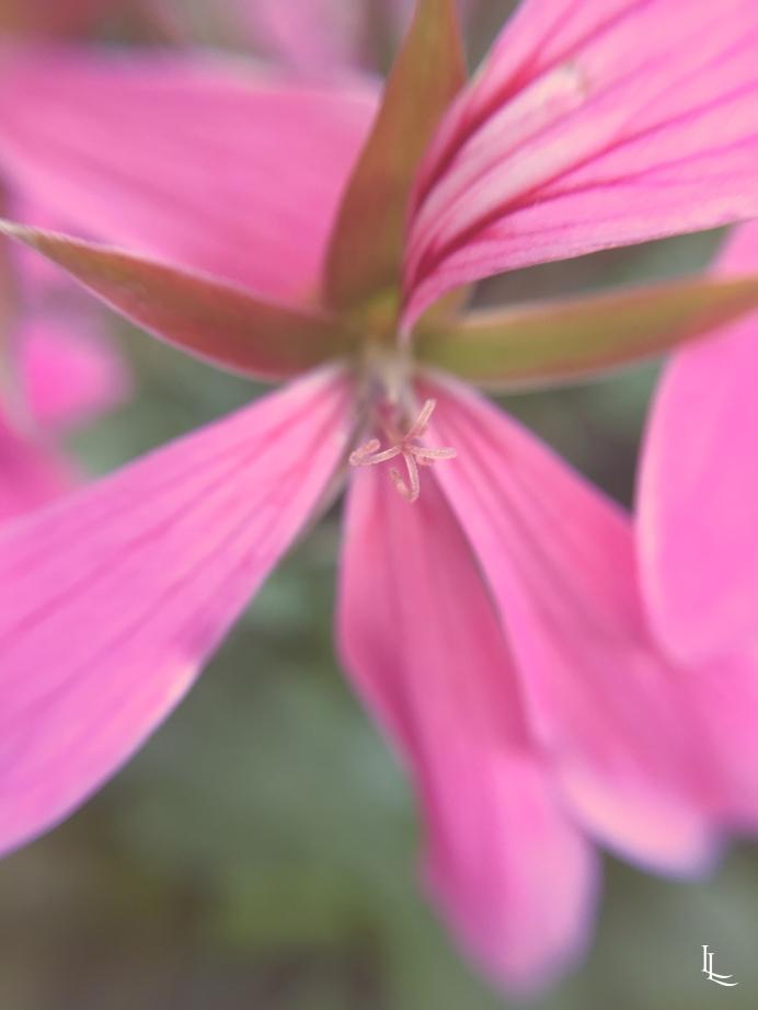 lina-levien-my-mode-garden (2)