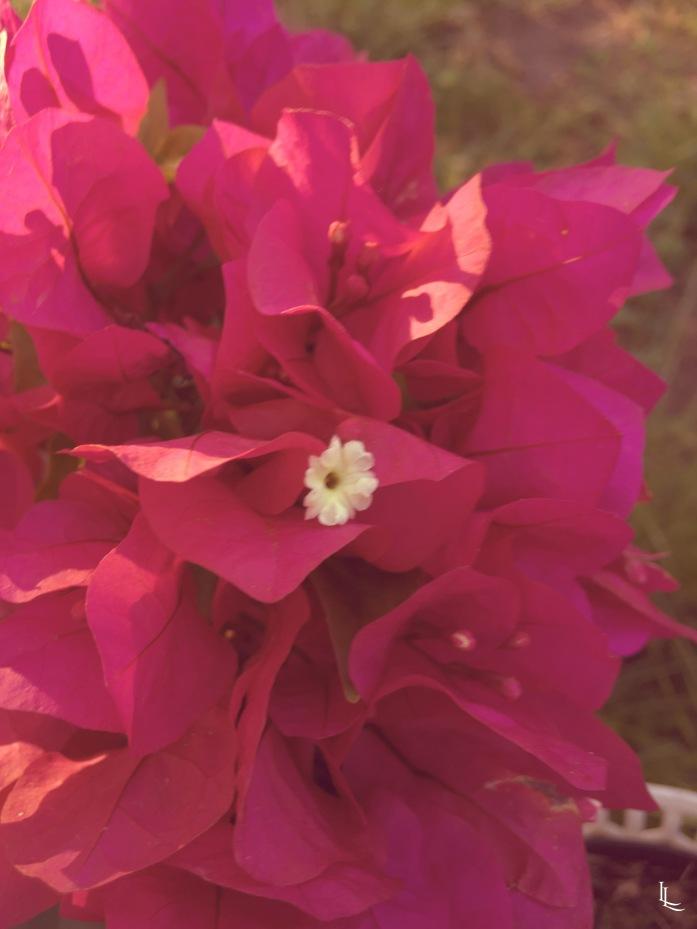 lina-levien-my-mode-garden (5)