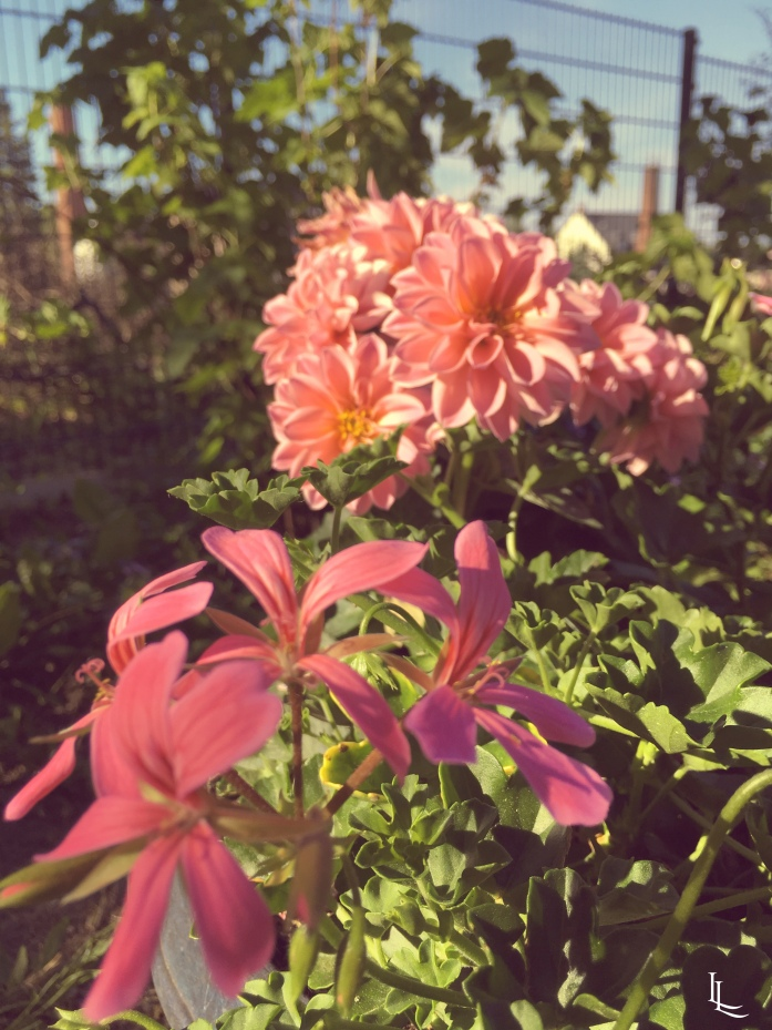 lina-levien-my-mode-garden