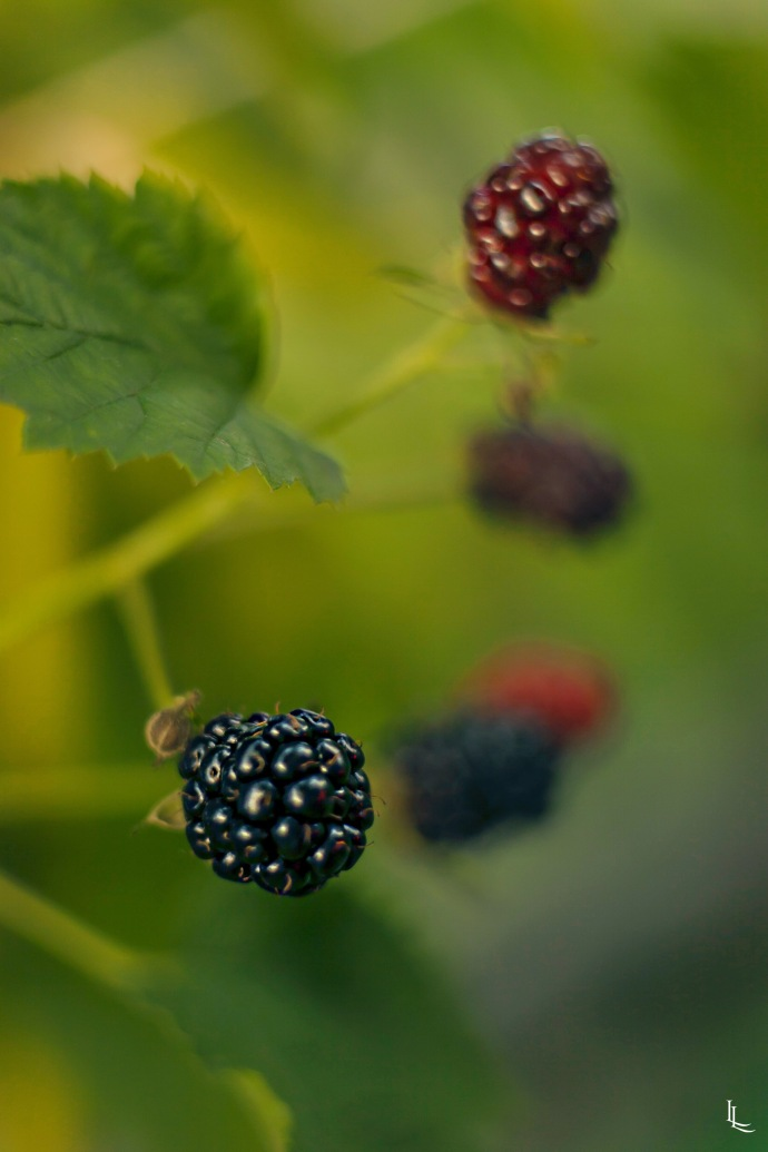 lina-levien-my-mode-polka-dot-petit-poa-blackberries
