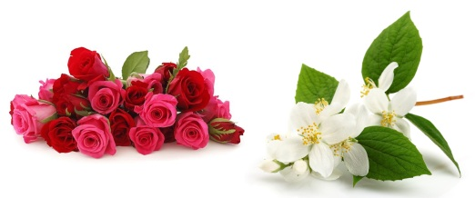 LL-jasmine-rose-flower-essence-cleopatra-beauty-secrets