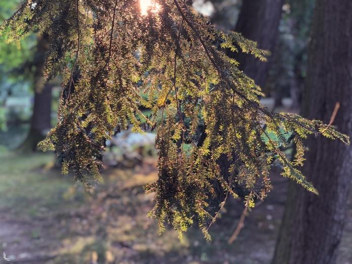 lina-levien-stadtpark-summer (3)