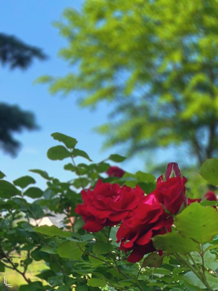 lina-levien-garden (7)