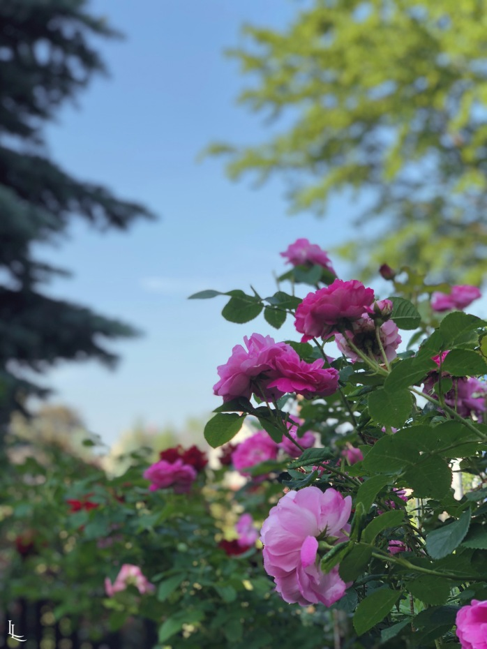 lina-levien-garden (8)