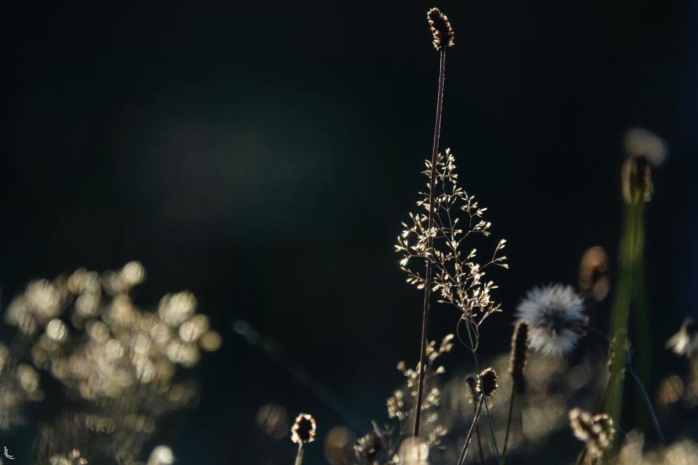 lina-levien-garden-rolls (10)