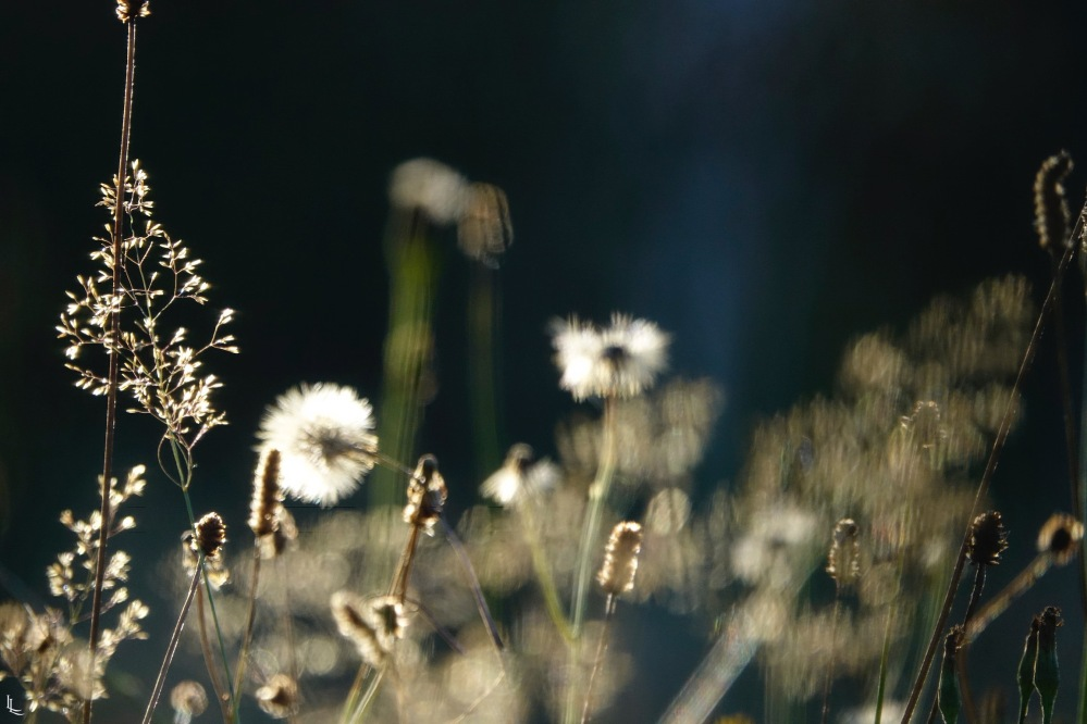 lina-levien-garden-rolls (11)