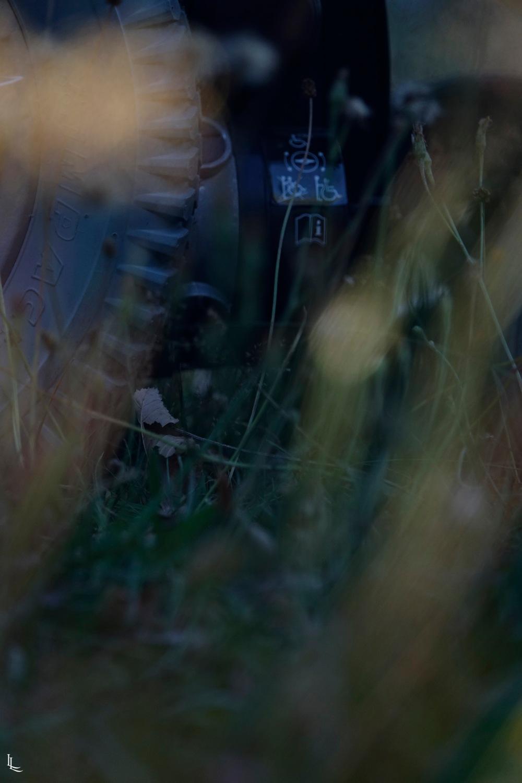 lina-levien-garden-rolls (2)