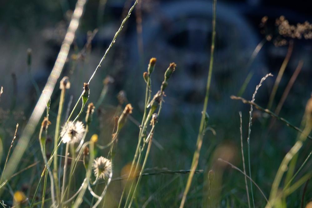 lina-levien-garden-rolls (3)