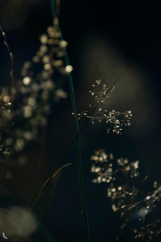 lina-levien-garden-rolls (4)
