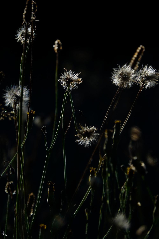 lina-levien-garden-rolls (5)