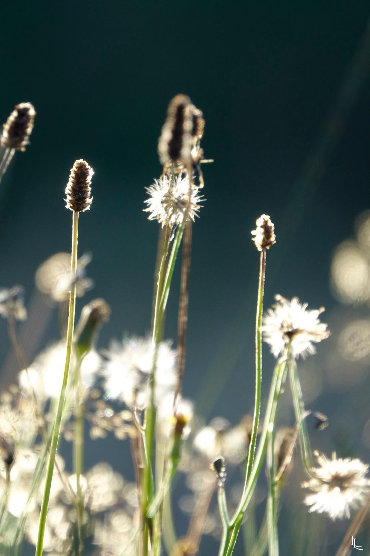 lina-levien-garden-rolls (6)