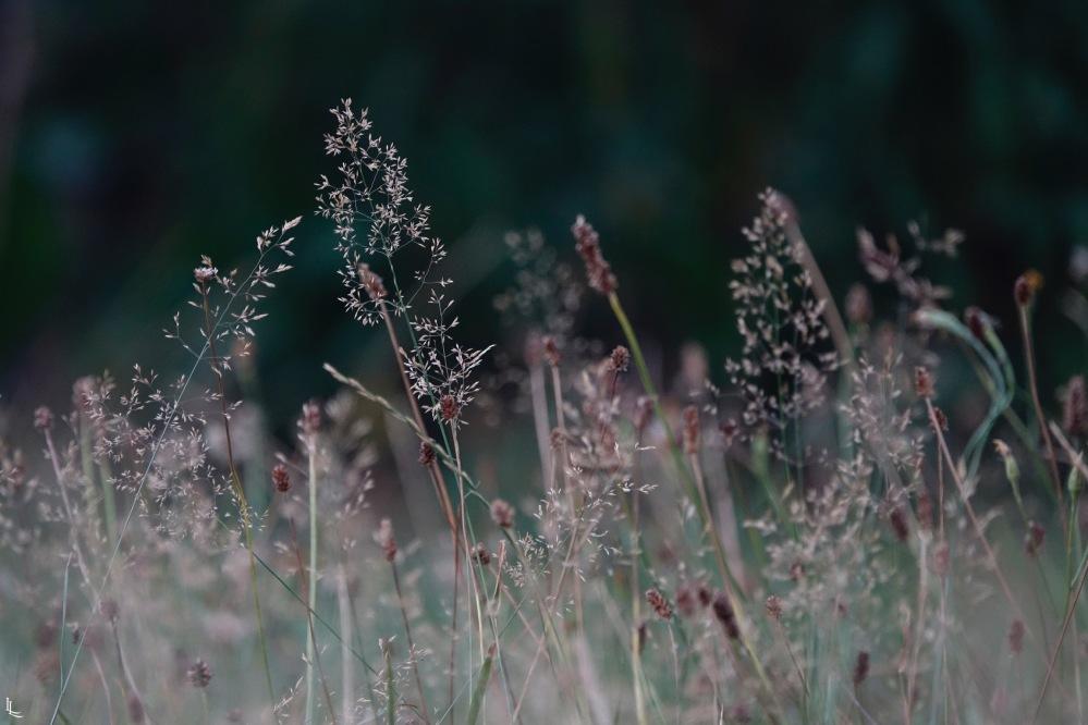 lina-levien-garden-rolls (7)