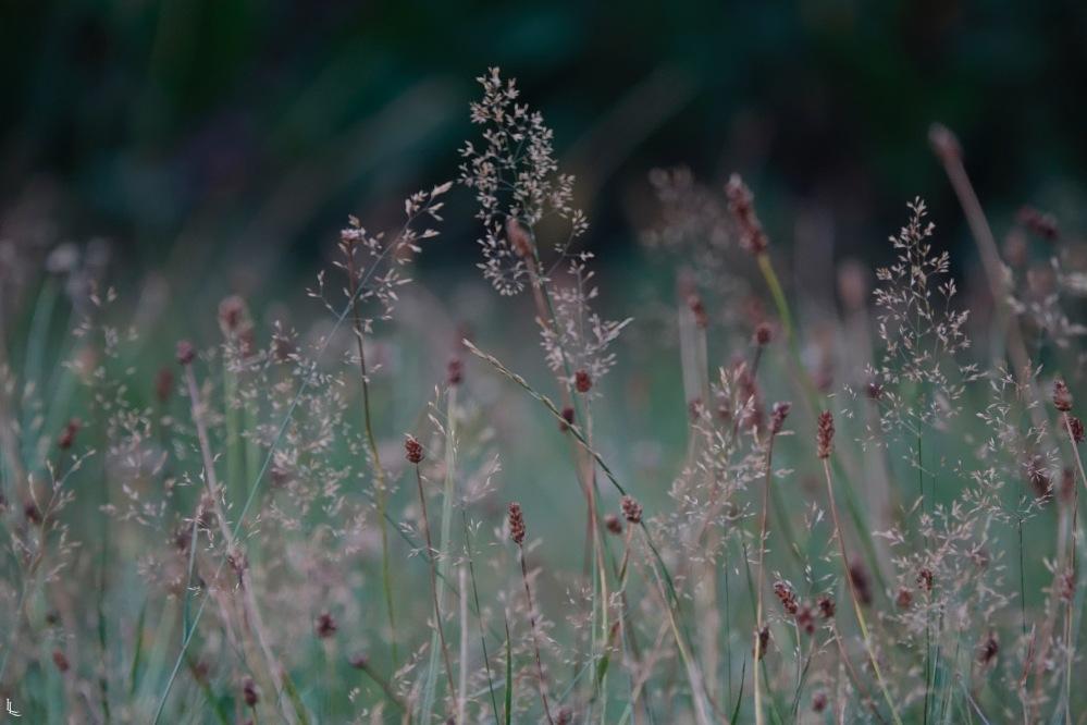 lina-levien-garden-rolls (8)
