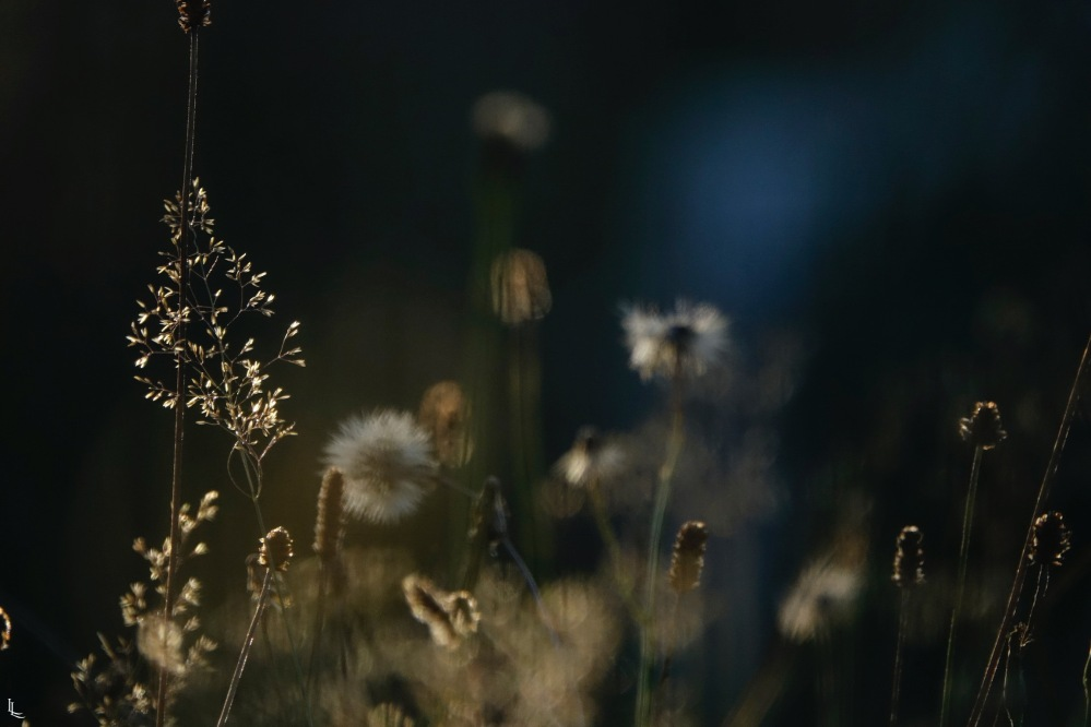 lina-levien-garden-rolls (9)